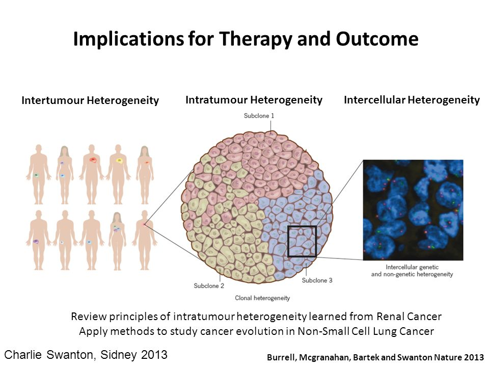 Implications for Therapy and Outcome Burrell, Mcgranahan, Bartek and Swanton Nature 2013 Intertumour Heterogeneity Intratumour HeterogeneityIntercellu