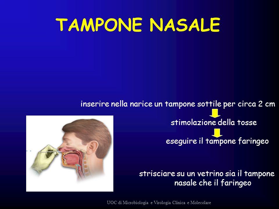 TAMPONE NASALE inserire nella narice un tampone sottile per circa 2 cm stimolazione della tosse eseguire il tampone faringeo strisciare su un vetrino