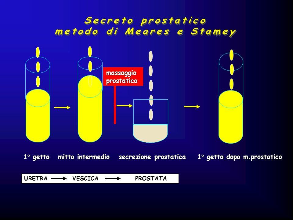 1° getto mitto intermedio secrezione prostatica 1° getto dopo m.prostatico URETRA VESCICA PROSTATA massaggioprostatico