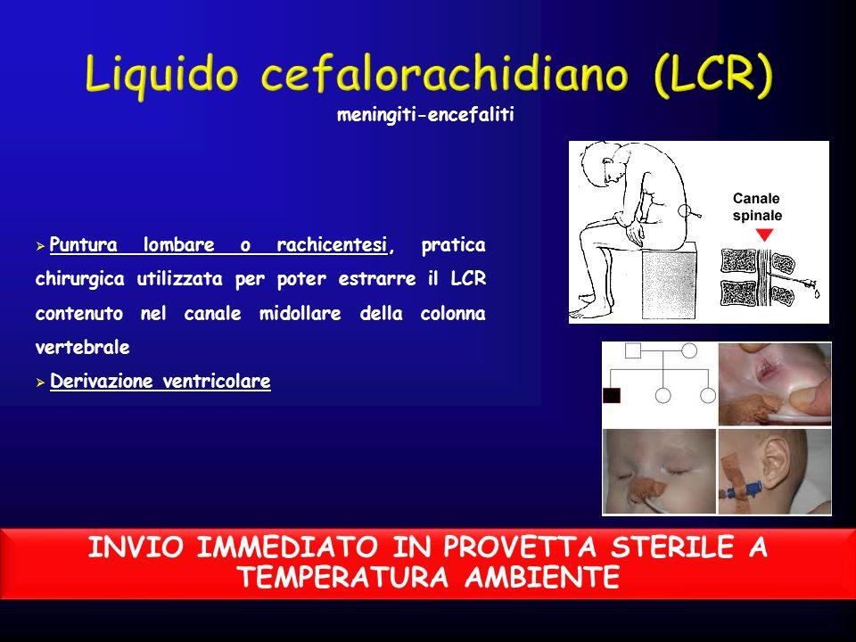Puntura lombare o rachicentesi Puntura lombare o rachicentesi, pratica chirurgica utilizzata per poter estrarre il LCR contenuto nel canale midollare