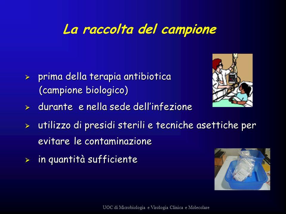 prima della terapia antibiotica prima della terapia antibiotica (campione biologico) (campione biologico) durante e nella sede dellinfezione durante e