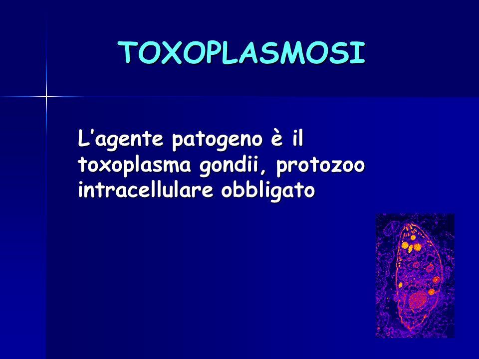 TOXOPLASMOSI Lagente patogeno è il toxoplasma gondii, protozoo intracellulare obbligato Lagente patogeno è il toxoplasma gondii, protozoo intracellula