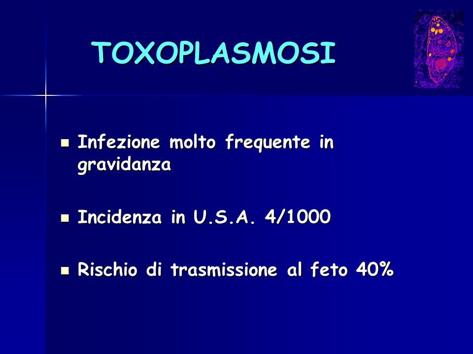 TOXOPLASMOSI Infezione molto frequente in gravidanza Infezione molto frequente in gravidanza Incidenza in U.S.A. 4/1000 Incidenza in U.S.A. 4/1000 Ris