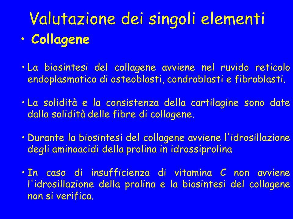 Valutazione dei singoli elementi Collagene La biosintesi del collagene avviene nel ruvido reticolo endoplasmatico di osteoblasti, condroblasti e fibro