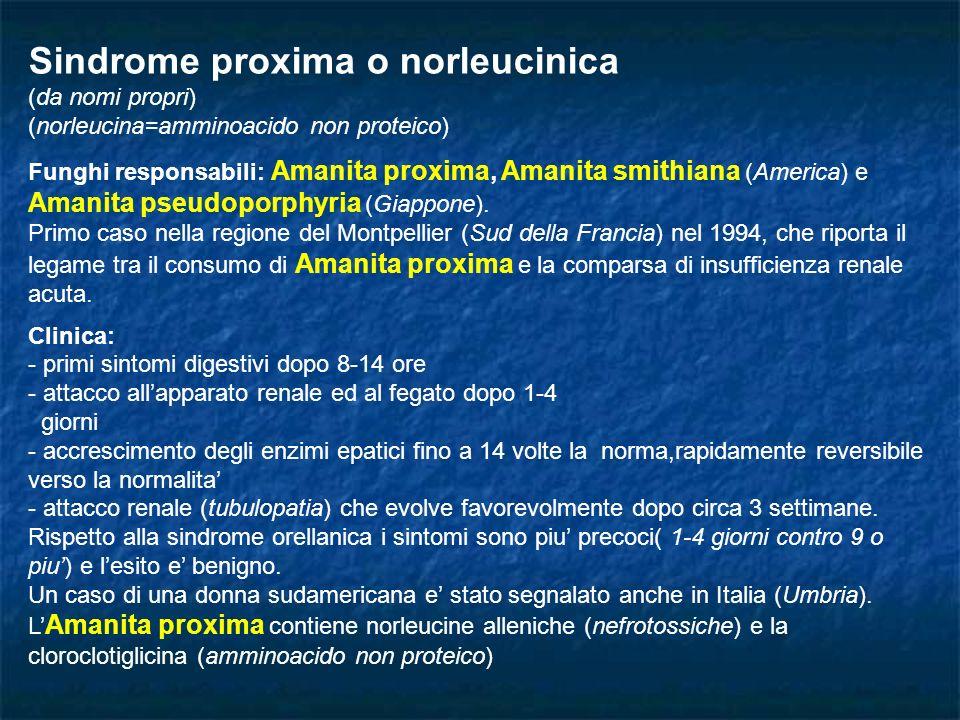 Sindrome proxima o norleucinica (da nomi propri) (norleucina=amminoacido non proteico) Funghi responsabili: Amanita proxima, Amanita smithiana (Americ