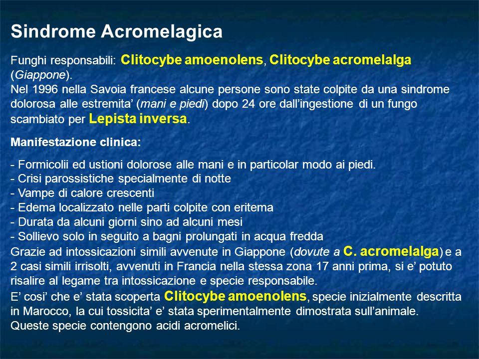 Sindrome Acromelagica Funghi responsabili: Clitocybe amoenolens, Clitocybe acromelalga (Giappone). Nel 1996 nella Savoia francese alcune persone sono