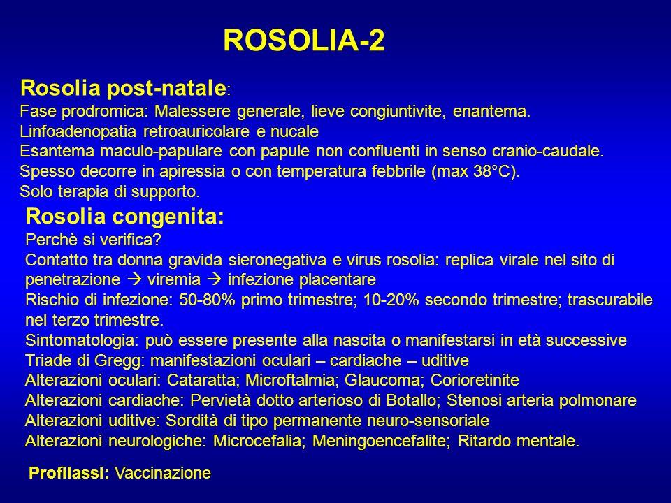 ROSOLIA-2 Rosolia post-natale : Fase prodromica: Malessere generale, lieve congiuntivite, enantema. Linfoadenopatia retroauricolare e nucale Esantema