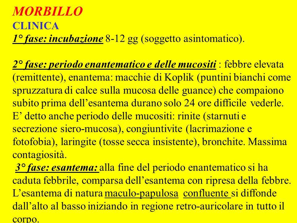 SCARLATTINA Diagnosi differenziale Morbillo: che pero presenta le mucositi (rinite, congiuntivite, laringite, bronchite); lesantema maculo-papuloso nel morbillo tende a rimanere con elementi staccati senza confluire.