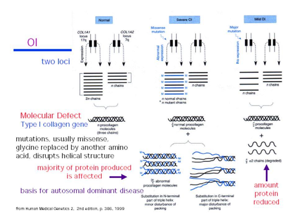 Variabilità di trasmissione ed espressione genica Eterogeneità allelica: lo stesso fenotipo causato da mutazioni diverse nello stesso gene – comune perché molte malattie sono causate da mutazioni che inducono una perdita di funzione (ogni mutazione che impedisce la produzione o la funzione del prodotto genico) Esempi: ipercolesterolemia famigliare, varie mutazioni a livello del gene del recettore LDL provocano la perdita di recettori funzionali con conseguente accumulo di colesterolo - talassemia, a produrre questo fenotipo sono molte mutazioni diverse nel gene della -globina