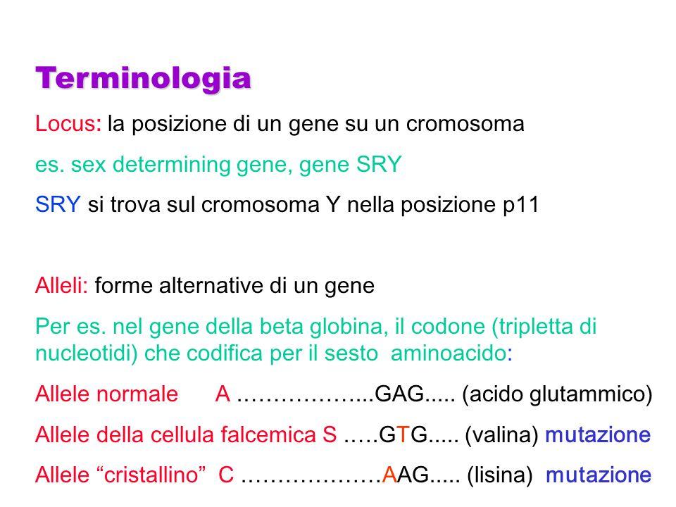 Terminologia Omozigote: porta 2 alleli identici ad un locus, A A o S S Eterozigote: porta 2 alleli differenti ad un locus, A S Eterozigote composto: porta 2 alleli non normali (2 mutazioni diverse) ad un locus, S C Portatore (sano): eterozigote asintomatico Probando (Propositus): lindividuo affetto attraverso il quale la famiglia di cui fa parte viene portata allesame Genotipo: costituzione genetica di un individuo, nella sua totalità o riferita ad un gene specifico, per es.