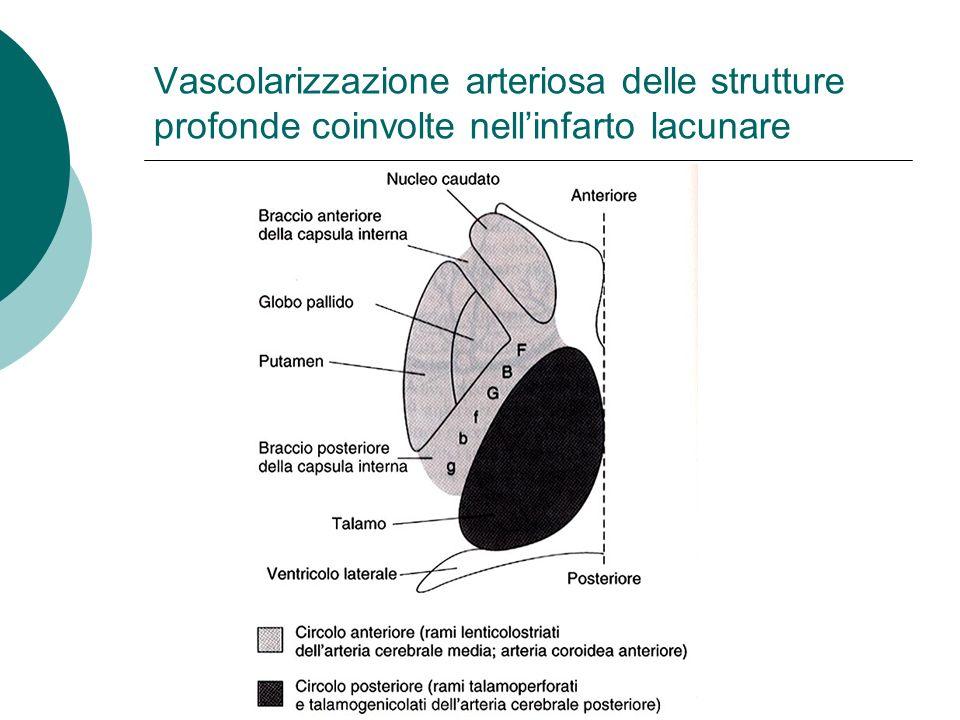 Vascolarizzazione arteriosa delle strutture profonde coinvolte nellinfarto lacunare