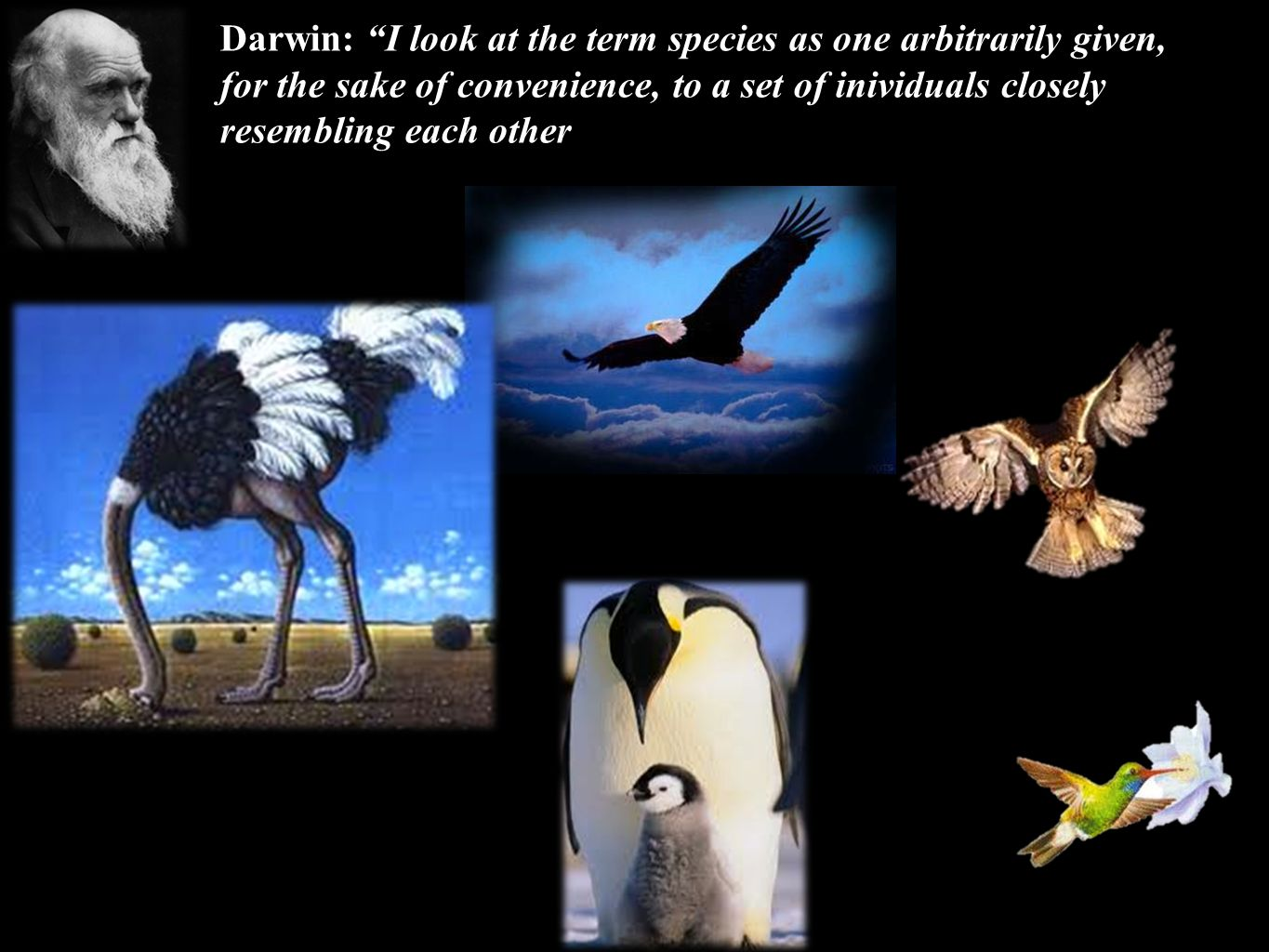 Darwin: I look at the term species as one arbitrarily given, for the sake of convenience, to a set of inividuals closely resembling each other