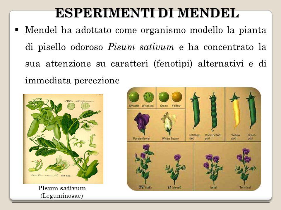 GENI ESSENZIALI (Alleli letali) Un allele che determini la morte di un organismo è definito allele letale ed il gene in questione è chiamato essenziale.