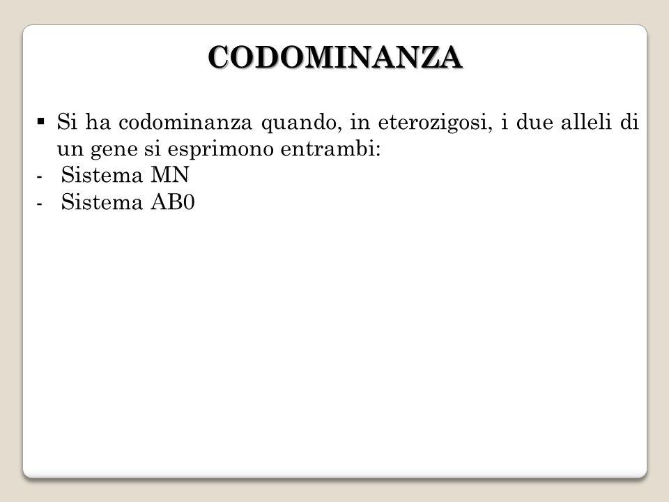 CODOMINANZA Si ha codominanza quando, in eterozigosi, i due alleli di un gene si esprimono entrambi: -Sistema MN -Sistema AB0