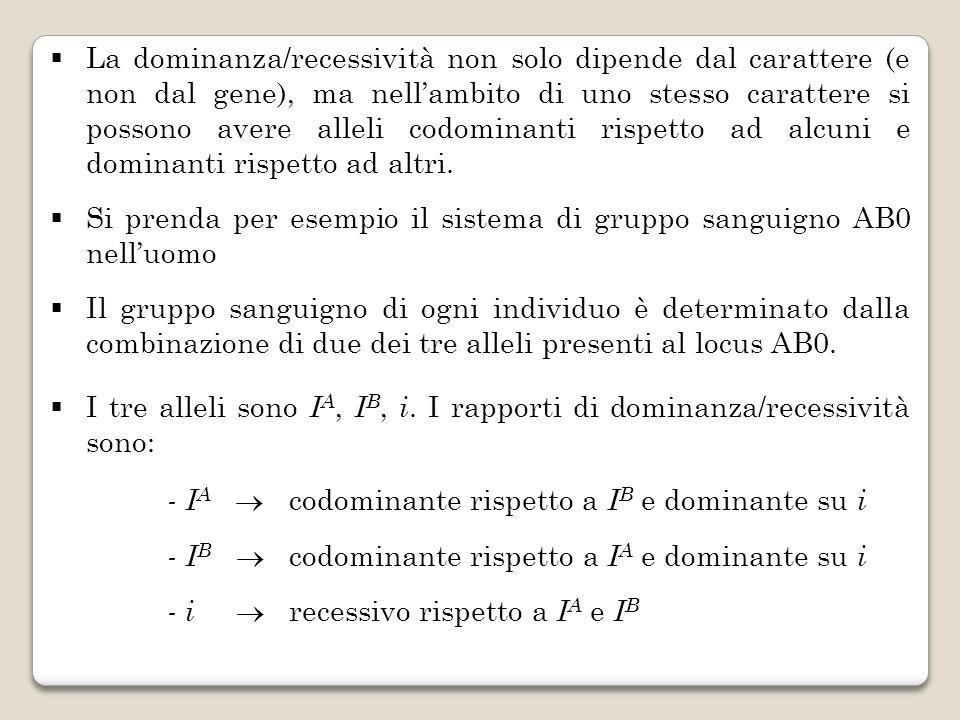 La dominanza/recessività non solo dipende dal carattere (e non dal gene), ma nellambito di uno stesso carattere si possono avere alleli codominanti ri