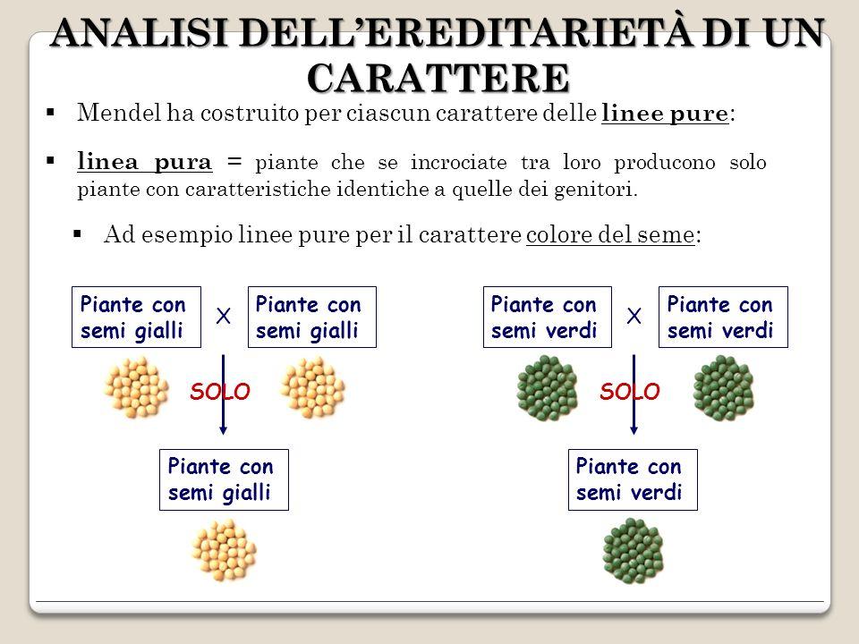 Quindi, ha incrociato linee pure diverse e ne ha esaminato la progenie: F 1 La generazione F 1 era composta da piante tutte uguali con piselli gialli X Generazione parentale P Generazione F 1 Piante con semi gialli Piante con semi gialli Piante con semi verdi linee pure linea ibrida