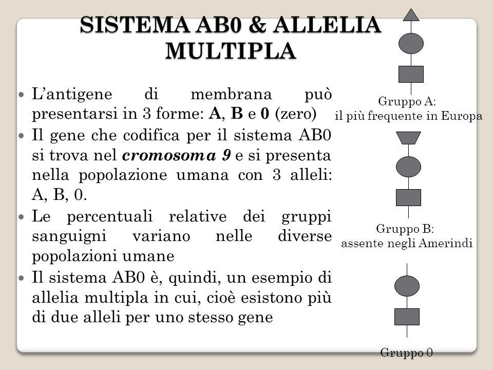 SISTEMA AB0 & ALLELIA MULTIPLA Lantigene di membrana può presentarsi in 3 forme: A, B e 0 (zero) Il gene che codifica per il sistema AB0 si trova nel