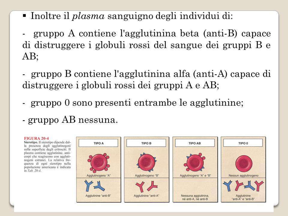 Inoltre il plasma sanguigno degli individui di: - gruppo A contiene l'agglutinina beta (anti-B) capace di distruggere i globuli rossi del sangue dei g
