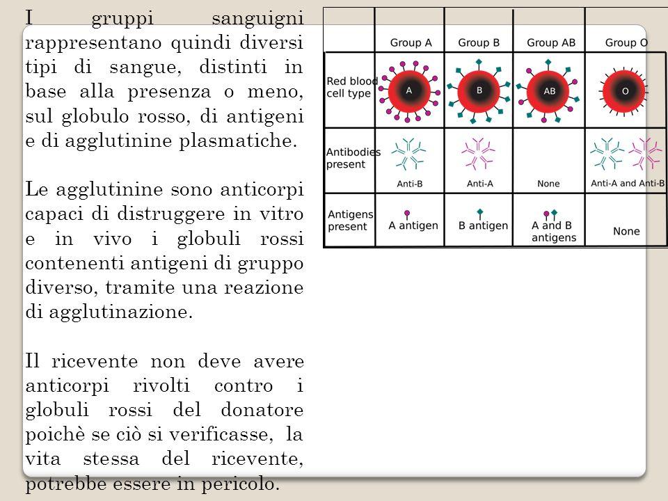 I gruppi sanguigni rappresentano quindi diversi tipi di sangue, distinti in base alla presenza o meno, sul globulo rosso, di antigeni e di agglutinine