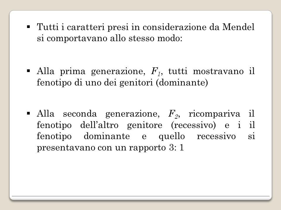 Tutti i caratteri presi in considerazione da Mendel si comportavano allo stesso modo: Alla prima generazione, F 1, tutti mostravano il fenotipo di uno