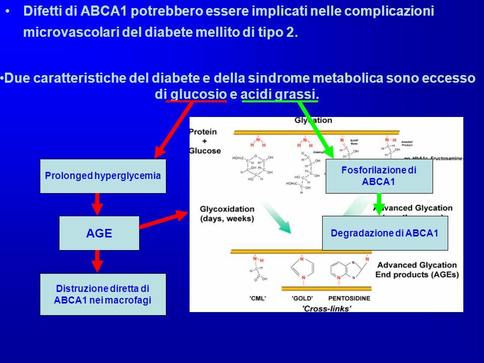 Difetti di ABCA1 potrebbero essere implicati nelle complicazioni microvascolari del diabete mellito di tipo 2. Due caratteristiche del diabete e della
