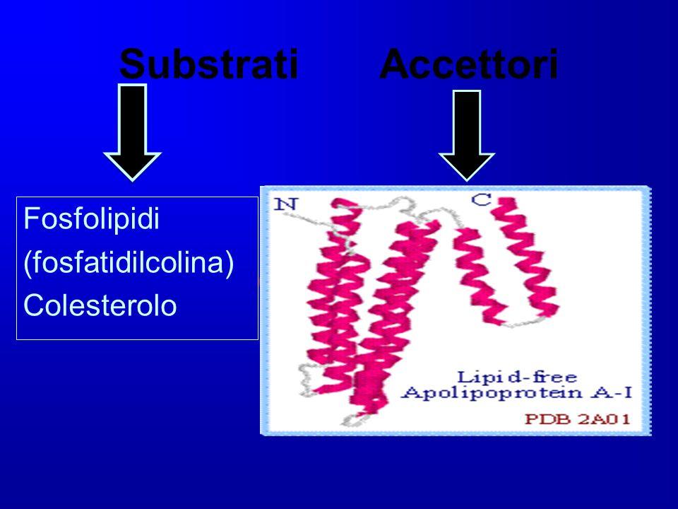 Substrati Accettori Fosfolipidi (fosfatidilcolina) Colesterolo Proteine contenenti alfa- eliche anfipatiche (11,22aa),in cui gli aa carichi si dispong