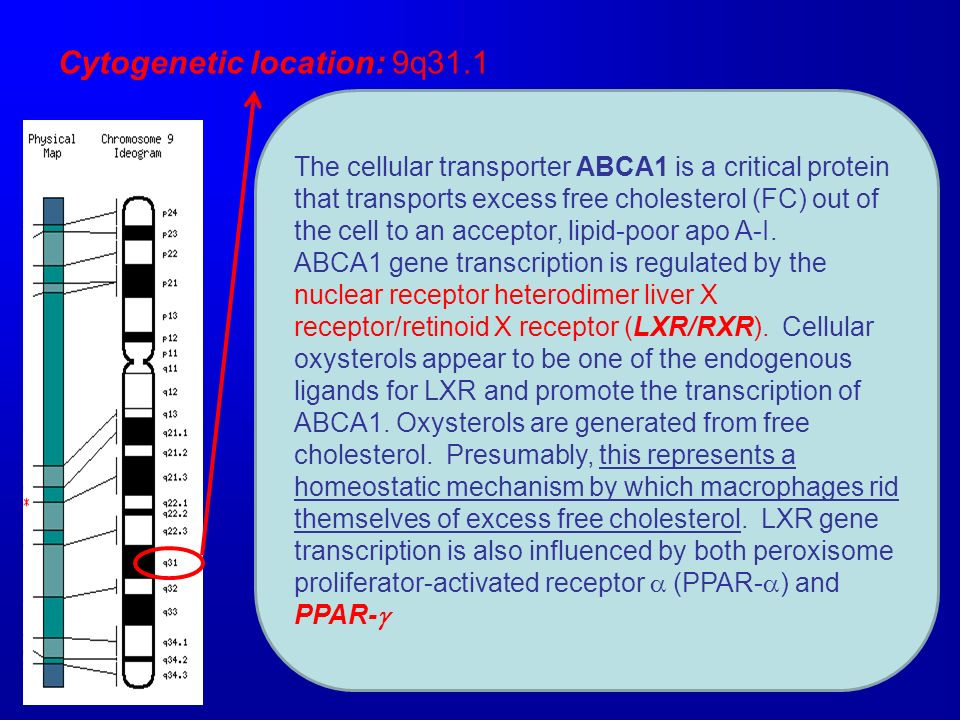Cytogenetic location: 9q31.1 The cellular transporter ABCA1 is a critical protein that transports excess free cholesterol (FC) out of the cell to an a