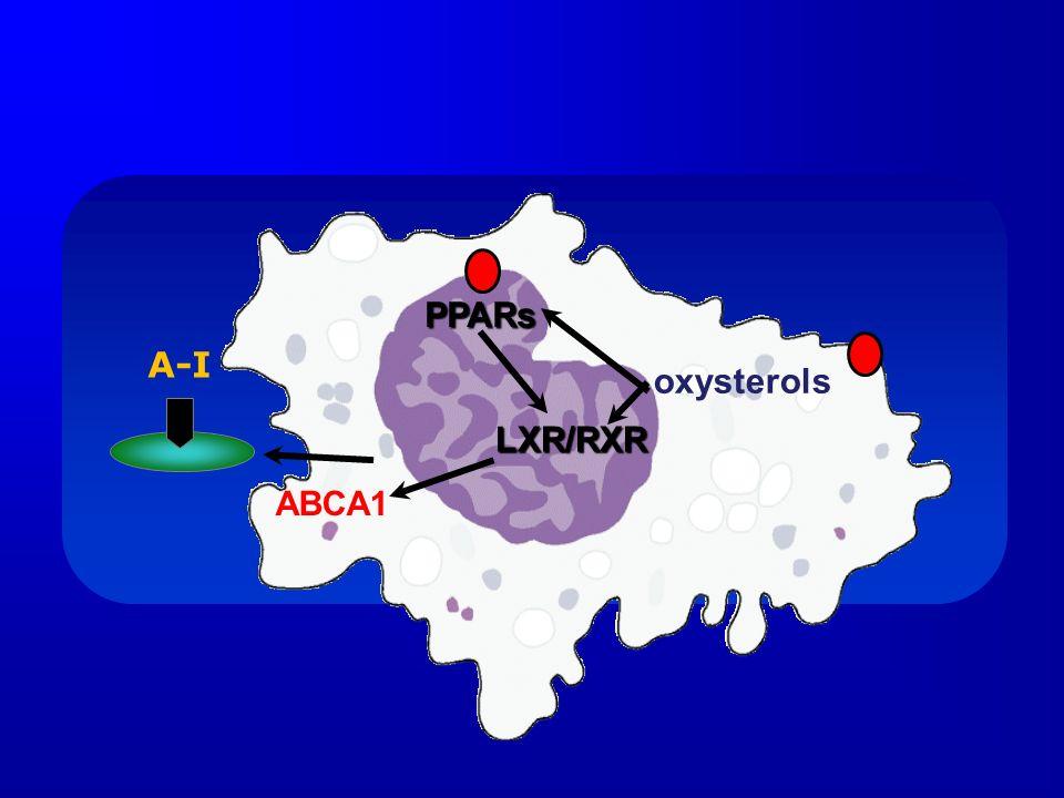 oxysterols LXR/RXR ABCA1 PPARs A-I