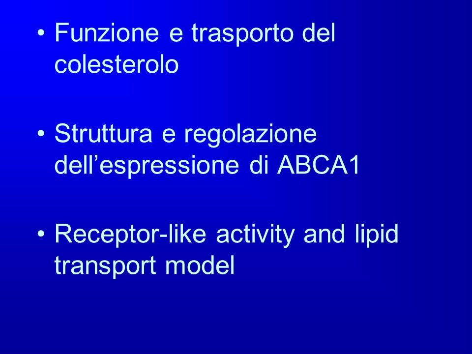 Funzione e trasporto del colesterolo Struttura e regolazione dellespressione di ABCA1 Receptor-like activity and lipid transport model