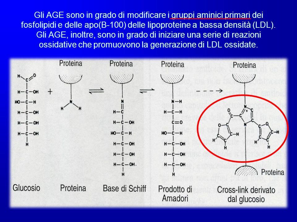 Gli AGE sono in grado di modificare i gruppi aminici primari dei fosfolipidi e delle apo(B-100) delle lipoproteine a bassa densità (LDL). Gli AGE, ino