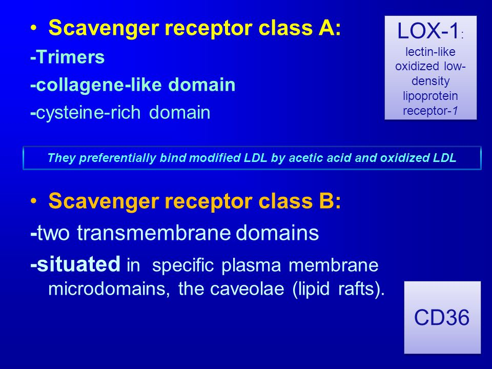 Scavenger receptor class A: -Trimers -collagene-like domain -cysteine-rich domain Scavenger receptor class B: -two transmembrane domains -situated in