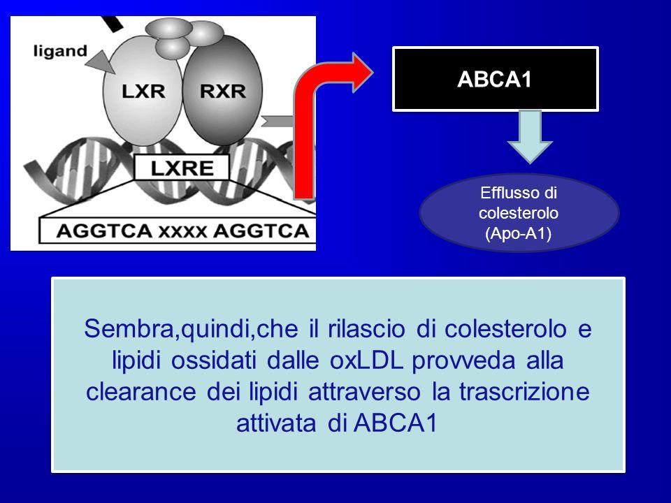 ABCA1 Sembra,quindi,che il rilascio di colesterolo e lipidi ossidati dalle oxLDL provveda alla clearance dei lipidi attraverso la trascrizione attivat