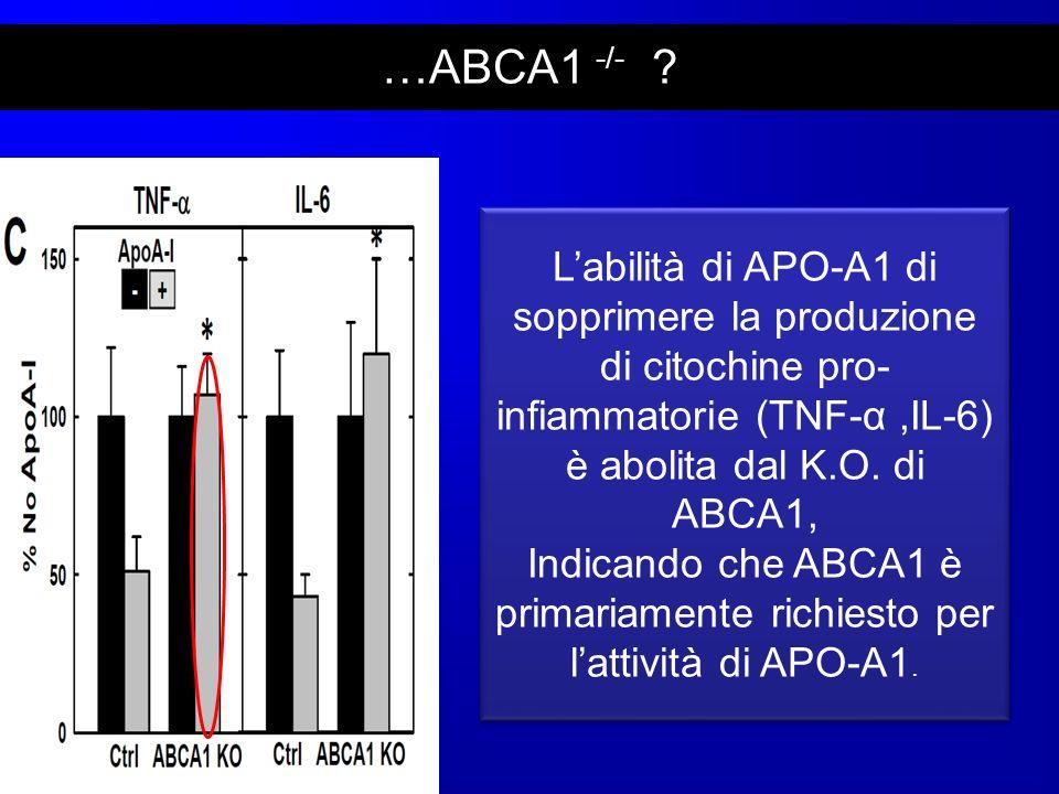 …ABCA1 -/- ? Labilità di APO-A1 di sopprimere la produzione di citochine pro- infiammatorie (TNF-α,IL-6) è abolita dal K.O. di ABCA1, Indicando che AB