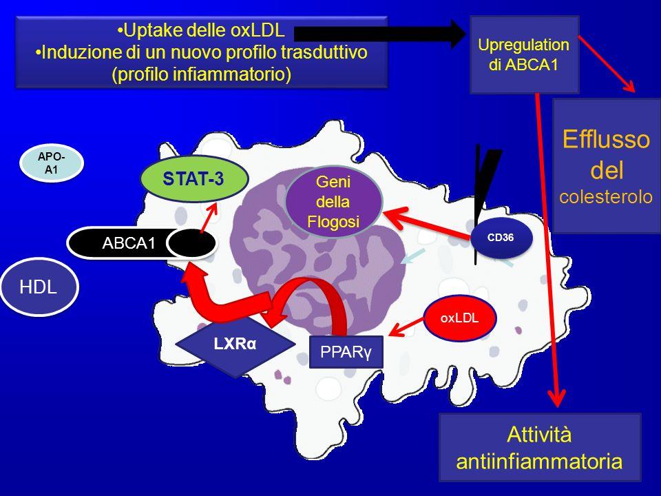 CD36 oxLDL Geni della Flogosi Uptake delle oxLDL Induzione di un nuovo profilo trasduttivo (profilo infiammatorio) Uptake delle oxLDL Induzione di un