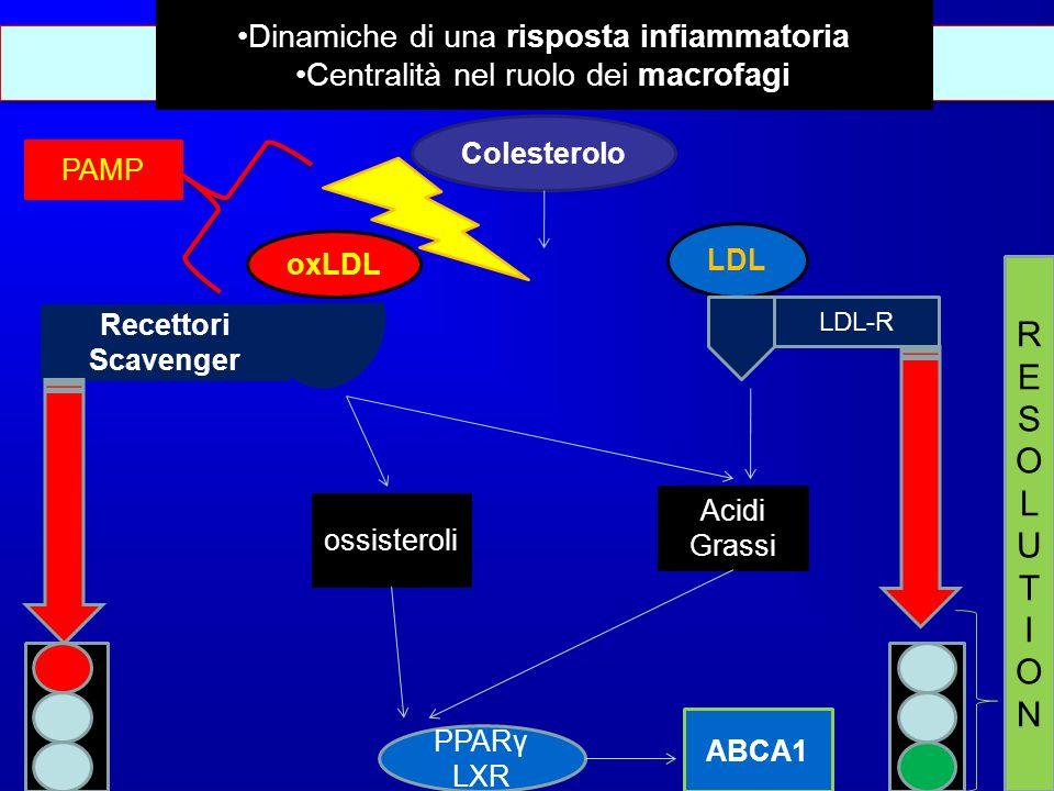 Bilancio Colesterolo LDL oxLDL LDL-R Recettori Scavenger Acidi Grassi ossisteroli PPARγ LXR ABCA1 PAMP RESOLUTIONRESOLUTION Dinamiche di una risposta