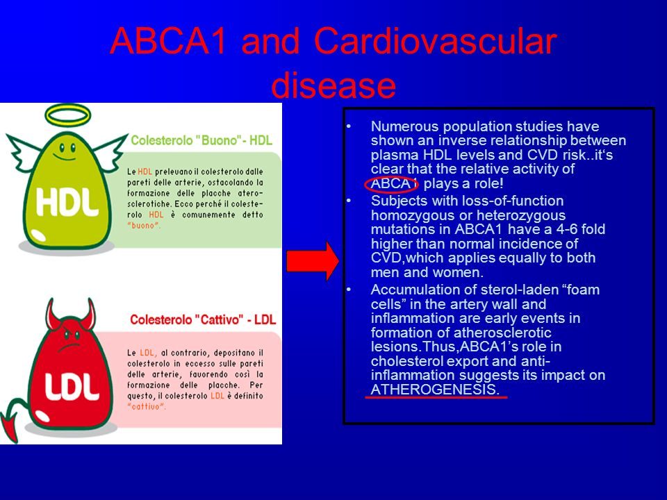 ABCA1 and Cardiovascular disease Numerous population studies have shown an inverse relationship between plasma HDL levels and CVD risk..its clear that