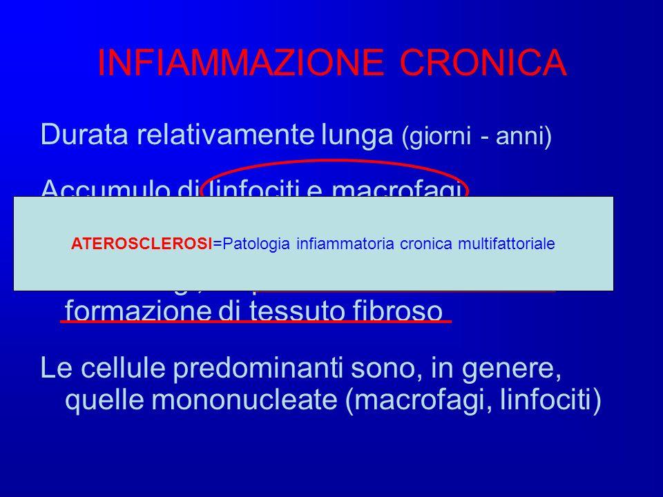 INFIAMMAZIONE CRONICA Durata relativamente lunga (giorni - anni) Accumulo di linfociti e macrofagi Caratterizzata dalla infiltrazione di linfociti e m