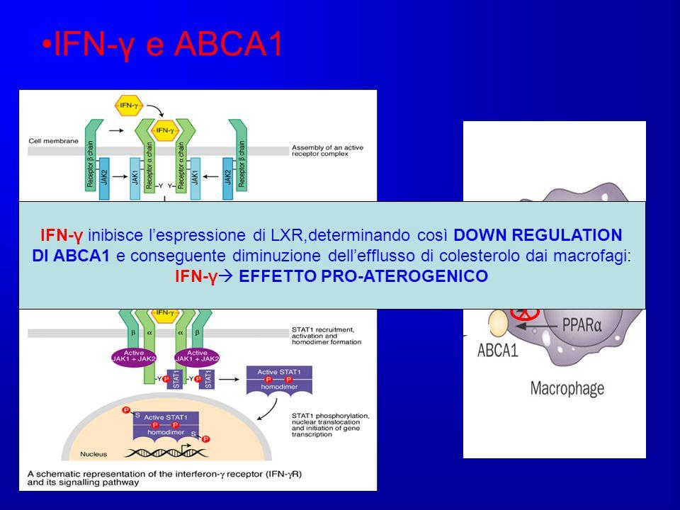 IFN-γ e ABCA1 IFN-γ X IFN-γ inibisce lespressione di LXR,determinando così DOWN REGULATION DI ABCA1 e conseguente diminuzione dellefflusso di colester