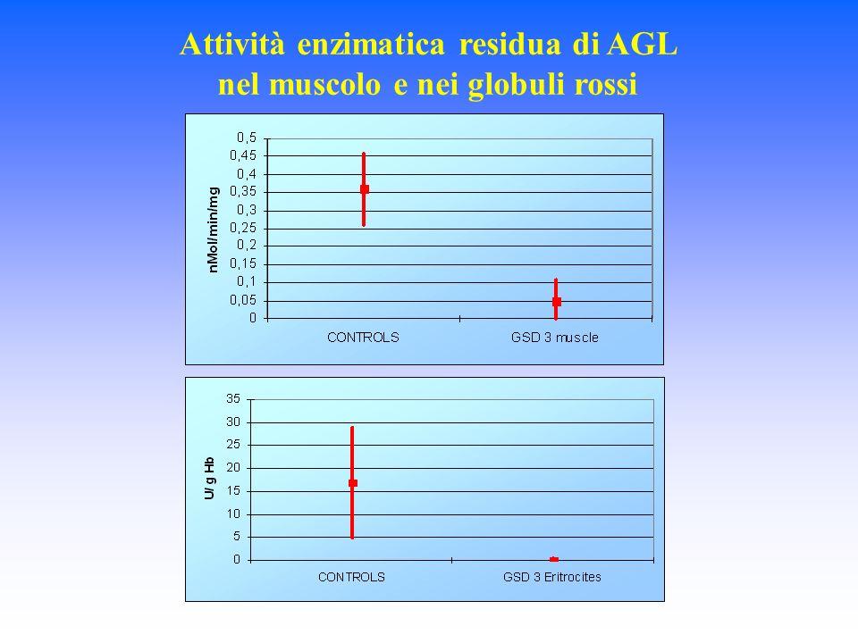 Attività enzimatica residua di AGL nel muscolo e nei globuli rossi