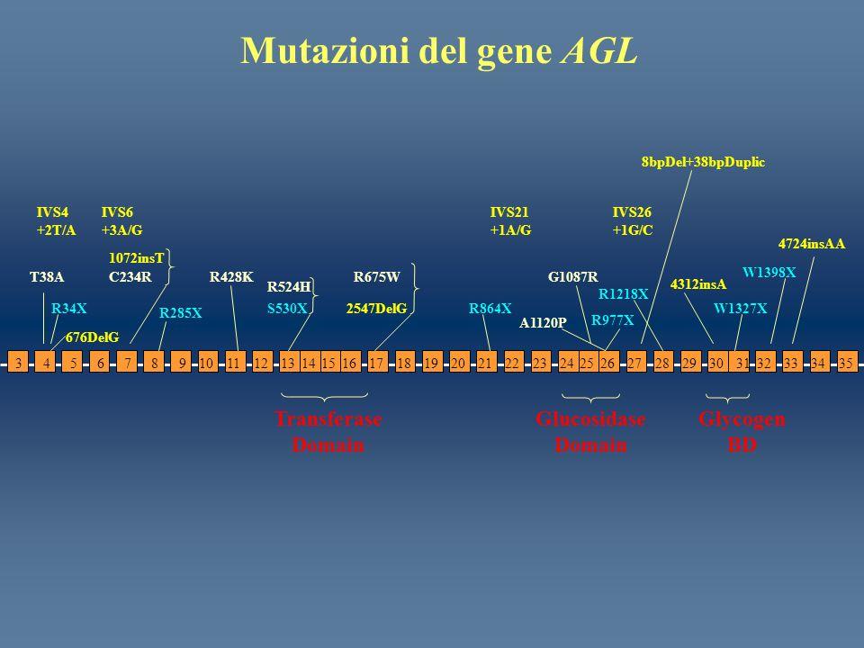 34567981011121516131417181920212223262728243029253132333534 Transferase Domain Glycogen BD Glucosidase Domain IVS21 +1A/G IVS4 +2T/A IVS26 +1G/C R675W