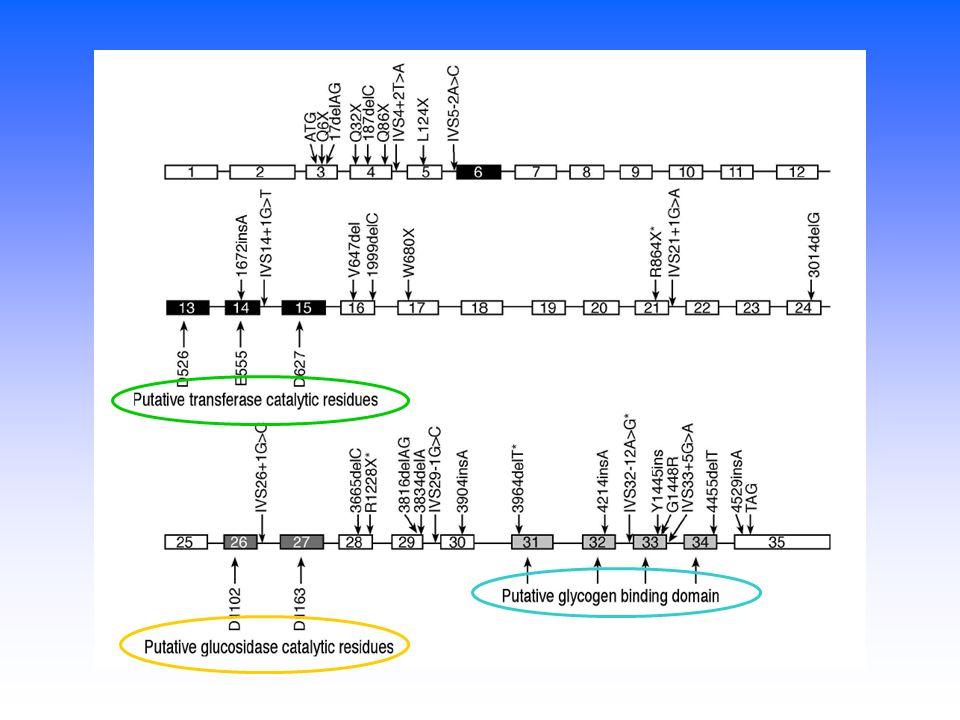 Per indagare la correlazione Genotipo-Fenotipo: Non vi sono mutazioni-hotspot, le sostituzioni nucleotidiche sono sparse lungo tutto il gene Abbiamo raggruppato I nostri pazienti sulla base della gravità del tipo di mutazione (nonsense, exon-skipping, missense) Il 10% dei pazienti sono doppi eterozigoti Mutazioni missense al di fuori dei domini funzionali noti sono comunque associate ad unattività enzimatica abolita Non vi sono evidenti relazioni tra la progressione di malattia e la importanza dellalterazione genetica, in parte per il fatto che la maggior parte dei nostri pazienti sono troppo giovani per essere predittivi sulla progressione della malattia
