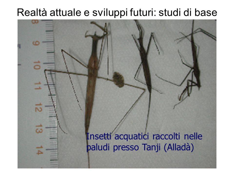 Realtà attuale e sviluppi futuri: studi di base Insetti acquatici raccolti nelle paludi presso Tanji (Alladà)