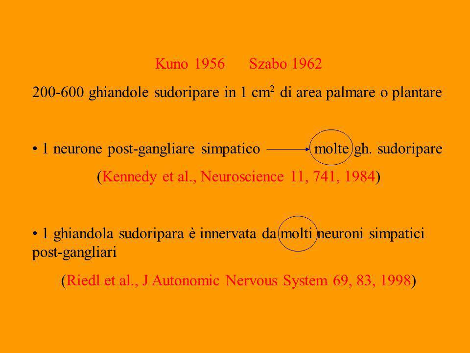Kuno 1956Szabo 1962 200-600 ghiandole sudoripare in 1 cm 2 di area palmare o plantare 1 neurone post-gangliare simpaticomolte gh.