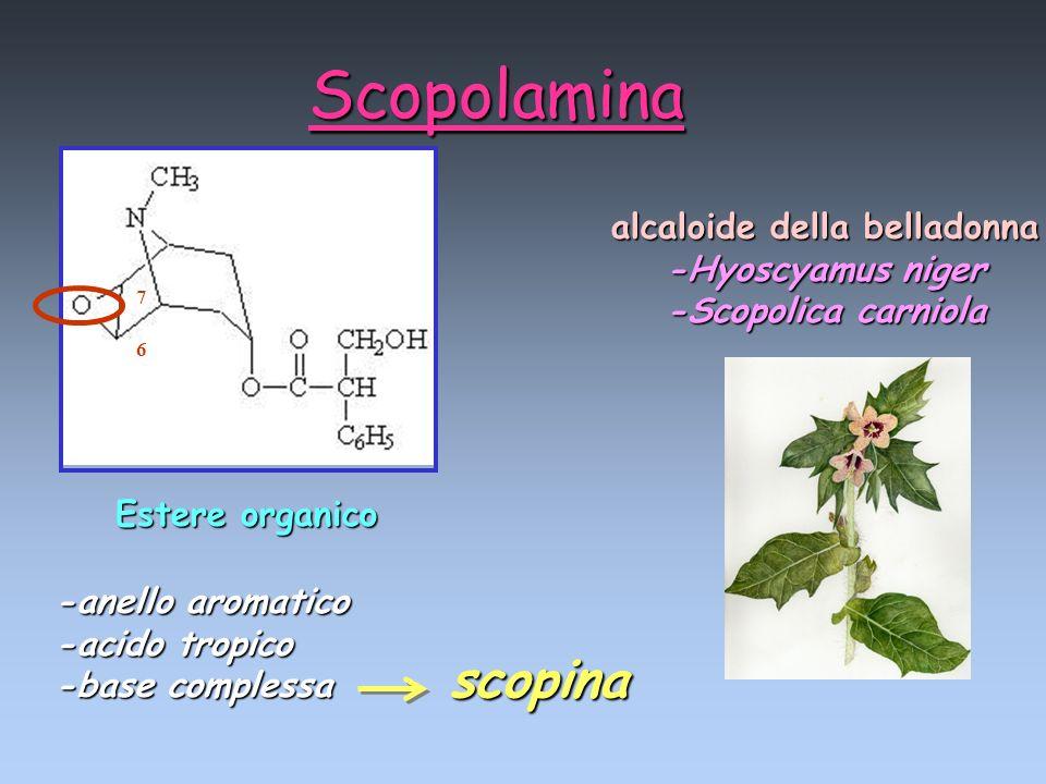 7 6 Estere organico Scopolamina alcaloide della belladonna -Hyoscyamus niger -Scopolica carniola -anello aromatico -acido tropico -base complessa scop