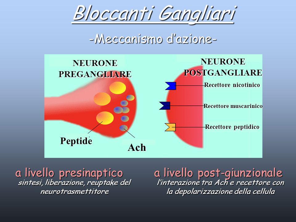 NEURONE PREGANGLIARE NEURONE POSTGANGLIARE Ach Recettore nicotinico Recettore muscarinico Recettore peptidico Peptide Bloccanti Gangliari -Meccanismo