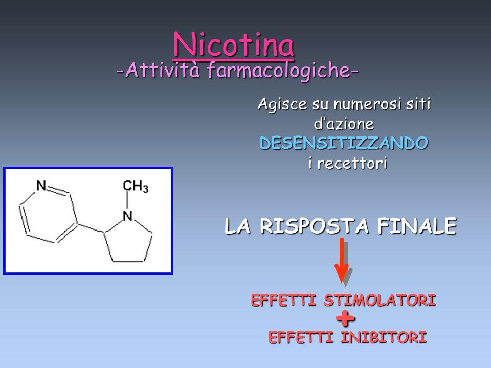Nicotina -Attività farmacologiche- Agisce su numerosi siti dazione DESENSITIZZANDO i recettori i recettori + EFFETTI STIMOLATORI EFFETTI INIBITORI LA