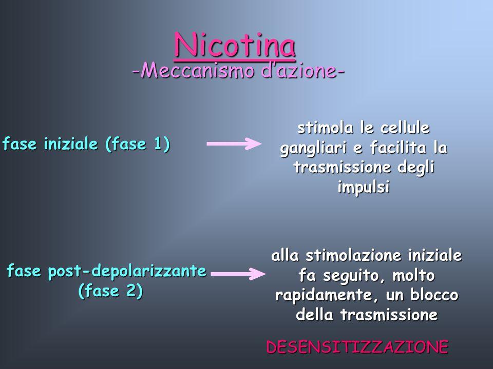 Nicotina -Meccanismo dazione- fase iniziale (fase 1) stimola le cellule gangliari e facilita la trasmissione degli impulsi alla stimolazione iniziale