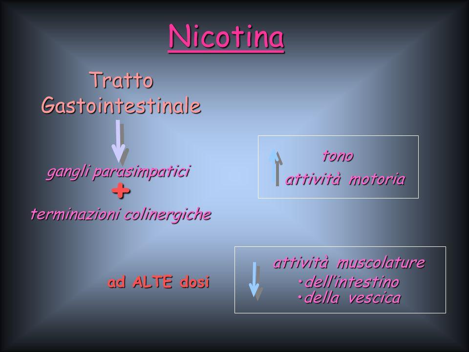 Nicotina tono attività motoria ad ALTE dosi attività muscolature dellintestinodellintestino della vescicadella vescica Tratto Gastointestinale gangli