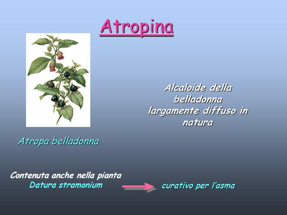 Atropina Alcaloide della belladonna largamente diffuso in natura Atropa belladonna Contenuta anche nella pianta Datura stramonium curativo per lasma