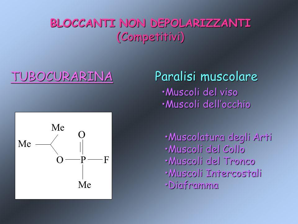 BLOCCANTI NON DEPOLARIZZANTI (Competitivi) TUBOCURARINA Me OPF O Paralisi muscolare Muscoli del visoMuscoli del viso Muscoli dellocchioMuscoli dellocc